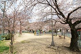 桜の季節には近所の公園