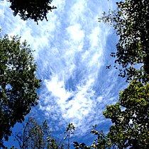 青い空と生い茂る緑