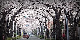 西用賀通り/「桜華の邸」:約180m・徒歩3分