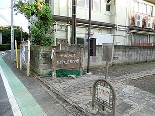 マンション(建物全部)-世田谷区上野毛2丁目 周辺環境:上野毛自然公園