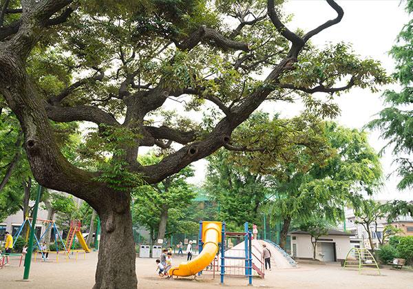 駒込公園 約460m(徒歩6分)