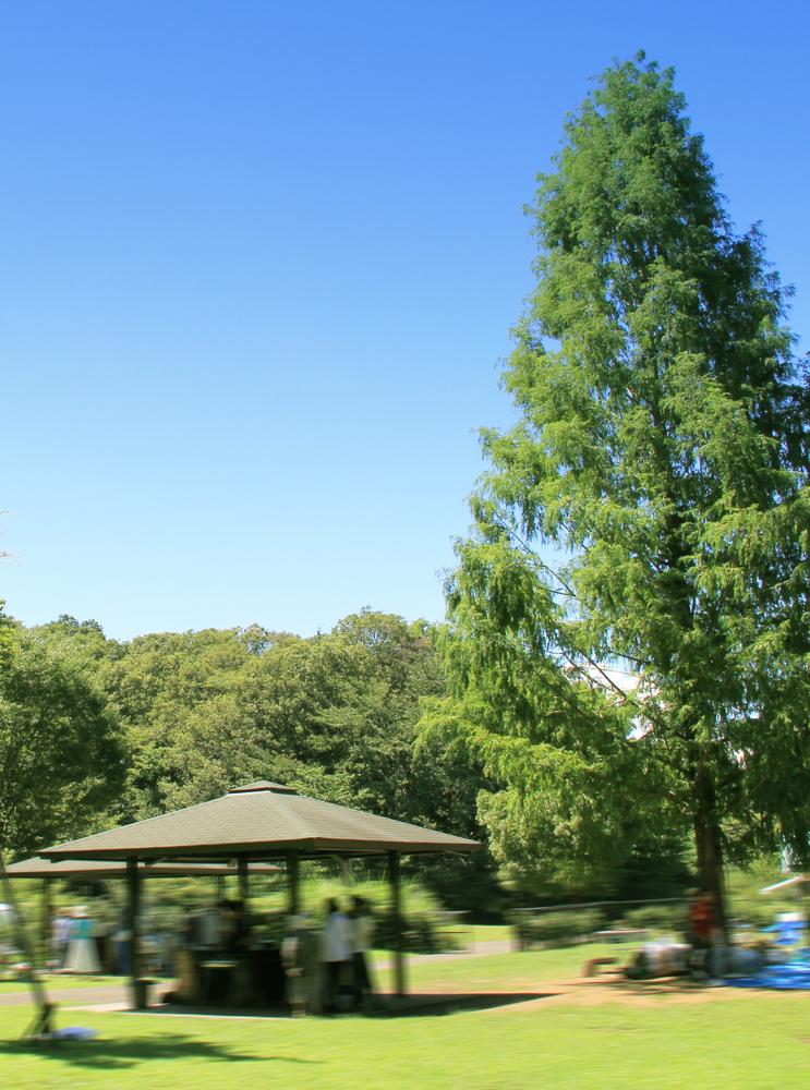 都立小山内裏公園 約1,040m(徒歩13分)