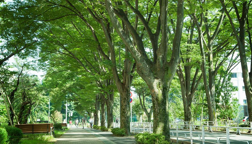 けやき通り 約310m(徒歩4分)(平成28年10月撮影)