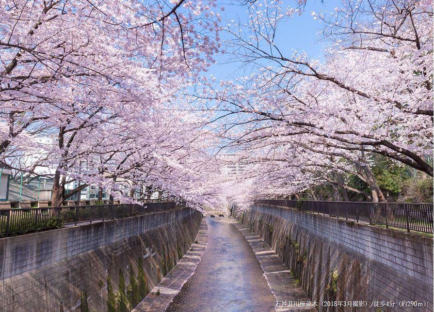 石神井川桜並木 約290m(徒歩4分)