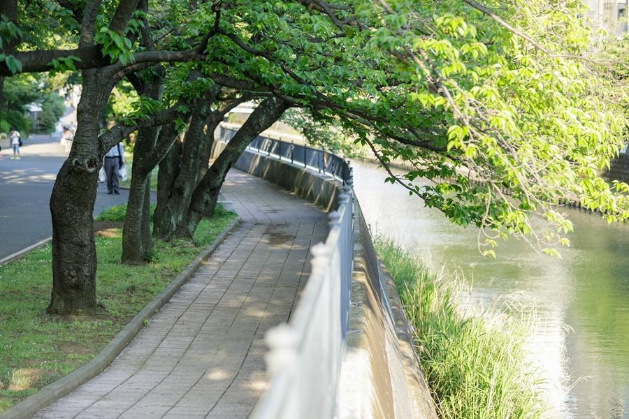 ハックドラッグ保土ケ谷帷子店 約200m(徒歩3分)