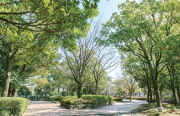 宮崎市中央公園 約780m(徒歩10分)
