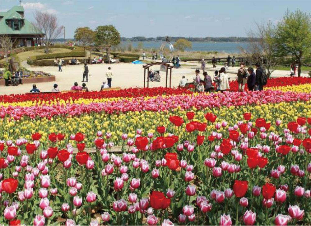 霞ヶ浦総合公園 約2,660m
