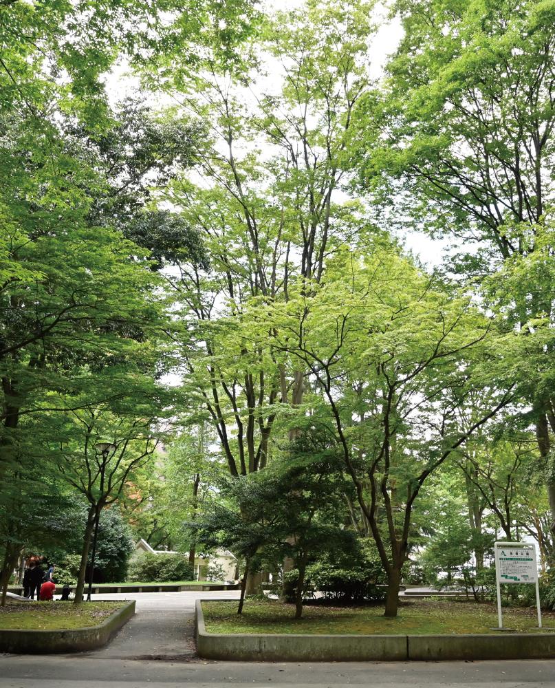 五橋公園 約310m(徒歩4分)