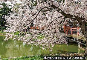 桃ヶ池公園 約850m(徒歩11分)