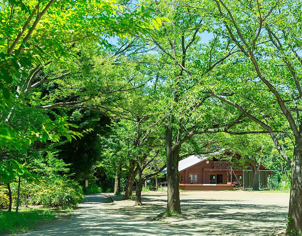 日本大学高等学校・中学校 約230m(徒歩3分)(2017年1月撮影)