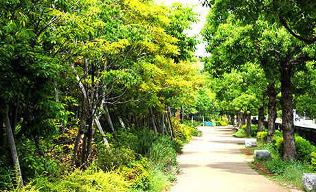 鷺沼くすのき公園 約390m(徒歩5分)