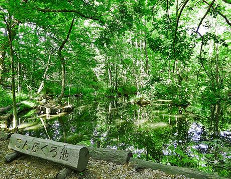 こんぶくろ池自然博公園 約990m(徒歩13分)
