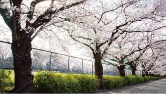 駒沢オリンピック公園 約1,290m(徒歩17分)