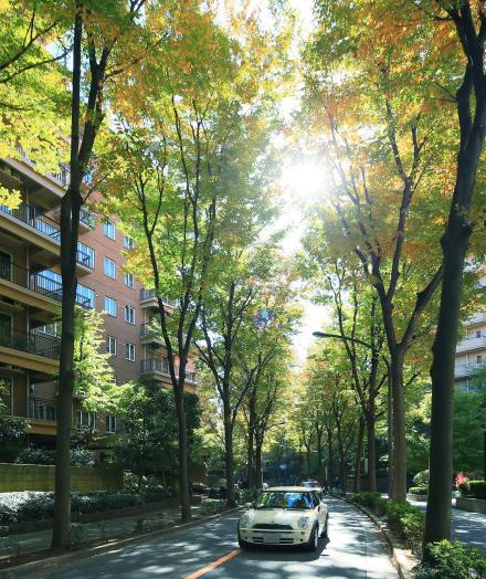 広尾散歩通り 約1,150m(徒歩15分)(2012年11月撮影)
