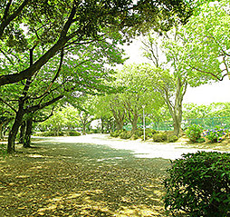 豊川公園 約220m(徒歩3分)