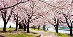 赤羽桜堤緑地(約420m 徒歩6分)