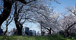 市ヶ谷駅周辺の桜 約400m(徒歩5分)