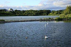 白鳥を近くで観察することもできる池。