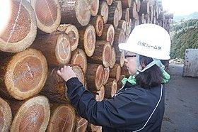 ◆原木確認作業風景