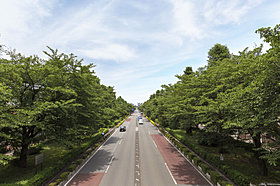 国立のメインストリート、大学通り。新東京百景にも選出。