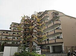 テラート1[4階]の外観
