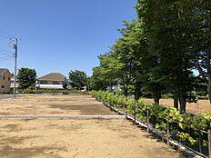 分譲地東側には並木があります。