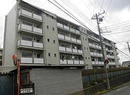 神奈川県平塚市大島の賃貸マンションの外観