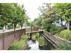 見沼代親水公園の川