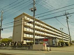 埼玉県上尾市上尾村の賃貸マンションの外観
