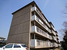 滋賀県守山市守山3の賃貸マンションの外観
