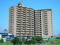 サンライズマンション岩出8 905号[9階]の外観