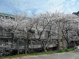 大阪府柏原市石川町の賃貸マンションの外観