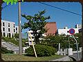 神戸女子大学 ...