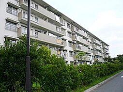 埼玉県三郷市彦成3丁目の賃貸マンションの外観