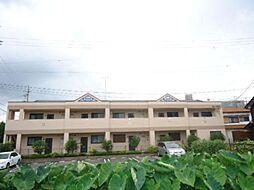 愛知県稲沢市祖父江町三丸渕高畑の賃貸マンションの外観