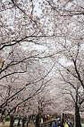 レジデンス高松[602号室]の外観