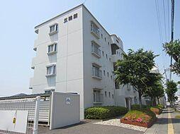 徳島県鳴門市撫養町立岩字七枚の賃貸マンションの外観