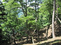 野尻湖畔に接する山林